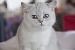 Gatos bonitos e bonitos Fotos de Stock Royalty Free