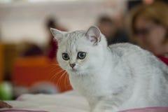 Gatos bonitos e bonitos Imagem de Stock Royalty Free