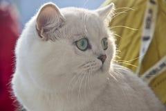 Gatos bonitos e bonitos Imagens de Stock