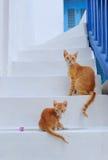 Gatos bonitos em mykonos ilha, cyclades, Grécia Fotografia de Stock Royalty Free