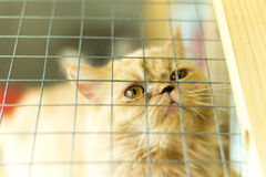 Gatos bonitos, gatos bonitos Fotografia de Stock Royalty Free