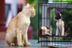 Gatos callejeros traseros 1 fotografía de archivo