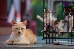 Gatos callejeros traseros 1 imagenes de archivo