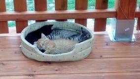 Gatos cansados el dormir fotografía de archivo libre de regalías