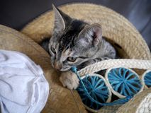 Gatos cinzentos pequenos doces Imagem de Stock Royalty Free