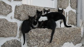 Gatos curiosos Imagen de archivo libre de regalías