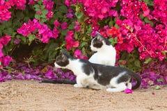 Gatos da caça Imagens de Stock