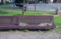 Gatos da rua no montjuïc (Montjuïc) em Barcelona Fotos de Stock Royalty Free