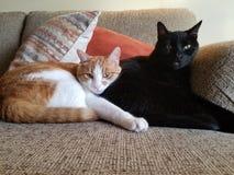 Gatos de abrazo en el sofá imagen de archivo
