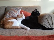 Gatos de abrazo en el sofá foto de archivo libre de regalías