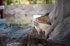Gatos de Bengal - tigres Imagens de Stock Royalty Free