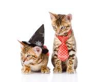 Gatos de Bengala con el sombrero de la bruja En el fondo blanco Fotos de archivo