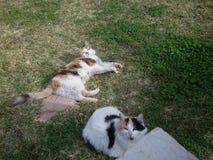 Gatos de casa en jardín en el día Fotos de archivo libres de regalías