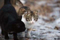 Gatos de familia Foto de archivo