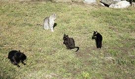 Gatos de la calle de la manada Imagen de archivo