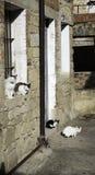 Gatos de la calle de la manada Fotografía de archivo