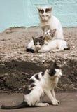 Gatos de la familia de cuatro miembros en el pórtico de piedra foto de archivo libre de regalías