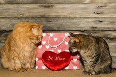 Gatos de la tarjeta del día de San Valentín Fotos de archivo