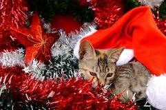 Gatos de las tarjetas de la Feliz Navidad y de una Feliz Año Nuevo Imagen de archivo