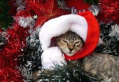 Gatos de las tarjetas de la Feliz Navidad y de una Feliz Año Nuevo Foto de archivo libre de regalías
