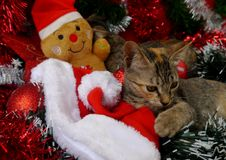 Gatos de las tarjetas de la Feliz Navidad y de una Feliz Año Nuevo Imagen de archivo libre de regalías