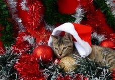 Gatos de las tarjetas de la Feliz Navidad y de una Feliz Año Nuevo Fotos de archivo