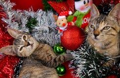 Gatos de las tarjetas de la Feliz Navidad y de una Feliz Año Nuevo Fotografía de archivo libre de regalías