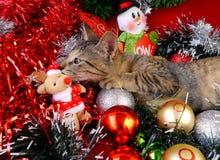 Gatos de las tarjetas de la Feliz Navidad y de una Feliz Año Nuevo Imágenes de archivo libres de regalías