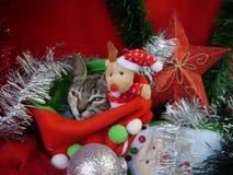 Gatos de las tarjetas de la Feliz Navidad y de una Feliz Año Nuevo Foto de archivo