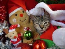 Gatos de las tarjetas de la Feliz Navidad y de una Feliz Año Nuevo Fotografía de archivo
