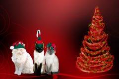 Gatos de Navidad foto de archivo libre de regalías