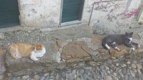 gatos de refrigeración Fotos de archivo
