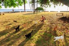 Gatos de San Juan Imagens de Stock Royalty Free