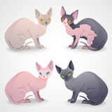 Gatos de Sphynx Imagem de Stock Royalty Free
