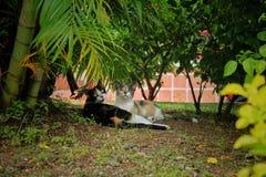 Gatos debajo de las plantas fotos de archivo libres de regalías