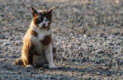 Gatos debajo del sol por la mañana Imagen de archivo libre de regalías