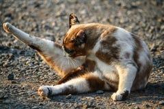 Gatos debajo del sol por la mañana Fotografía de archivo