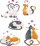 Gatos del amor Foto de archivo libre de regalías