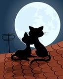 Gatos del amor en el tejado Foto de archivo libre de regalías