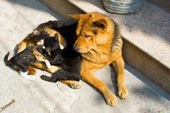 Gatos del ANG del perro fotos de archivo libres de regalías