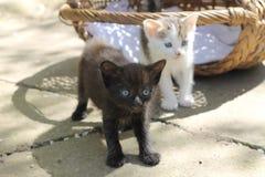 Gatos del bebé Fotografía de archivo libre de regalías