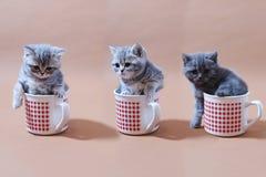 Gatos del bebé Imágenes de archivo libres de regalías