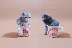Gatos del bebé Foto de archivo libre de regalías