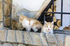 Gatos del bebé Foto de archivo