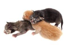 Gatos del bebé aislados Fotografía de archivo