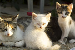 Gatos del bebé de la calle con la madre Imágenes de archivo libres de regalías