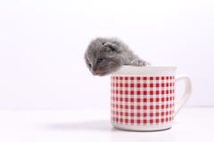 Gatos del bebé en una taza Imagen de archivo libre de regalías