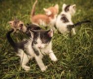 Gatos del bebé que juegan en la hierba Imagenes de archivo