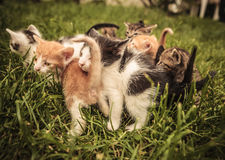 Gatos del bebé que se colocan y que juegan en la hierba Imagen de archivo libre de regalías