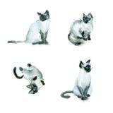 Gatos del bosquejo de la acuarela Imagen de archivo libre de regalías